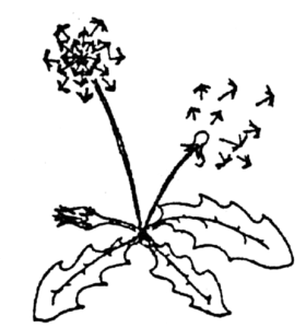 Logo-Pusteblume